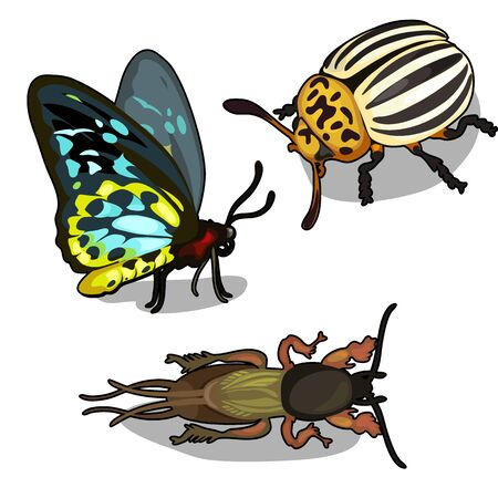 parasitic infestation: Set of butterflies, colorado beetle and cockroach