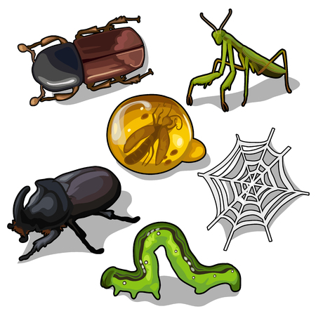 World of insects, beetles, grasshopper and others Illustration