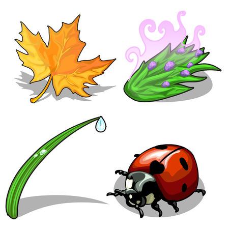Ladybug and plants on a white background