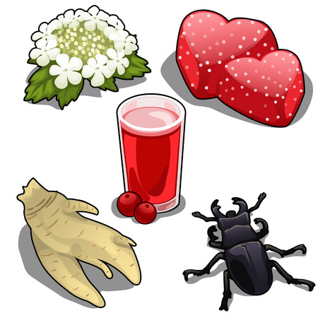 coleoptera: Spring wreath, juice, jellies, root and beetle