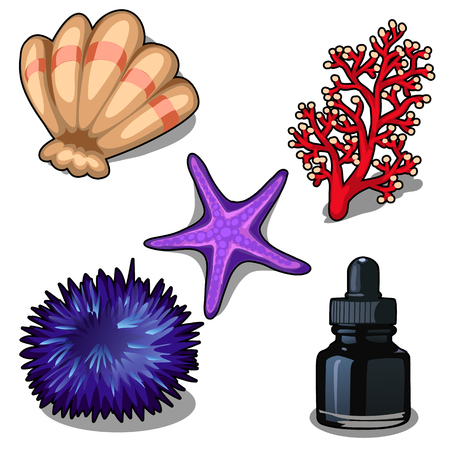 polyp: Sea creatures and black ink in bottle. Vector