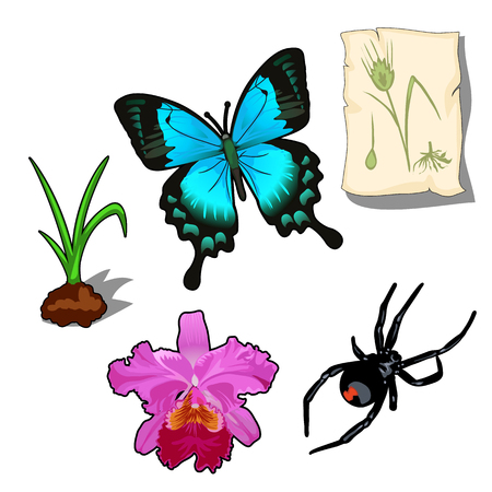 torn edge: Butterfly, spider and plants in cartoon style