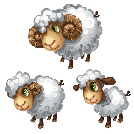 Pecore bianche Animale di vettore