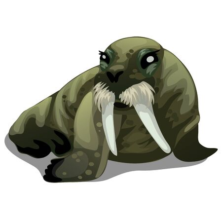 flippers: Serious old walrus with large tusks isolated Illustration