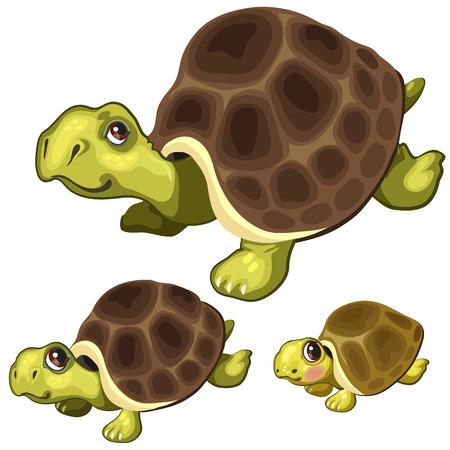 Karikaturschildkröte auf weißem Hintergrund. Vector die Tiere, die für Animation, Drucke der Kinder und andere Designbedürfnisse lokalisiert werden Standard-Bild - 76707183