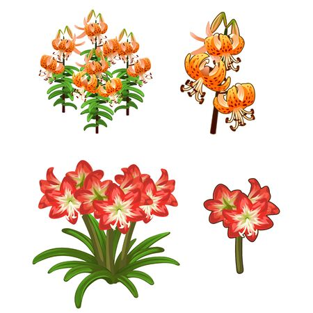 lilium: Beautiful red and orange lilies. Vector flowers