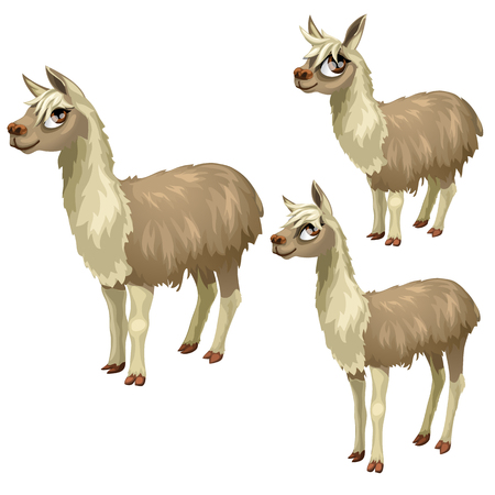kiddie: Maturation stages of the lama, three stages of growth