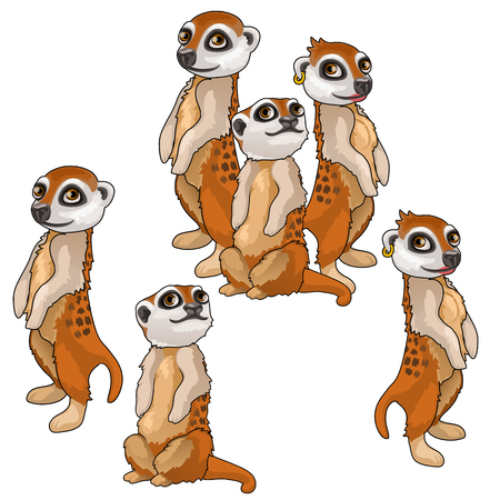 Funny family of meerkats. Vector animals isolated Illustration
