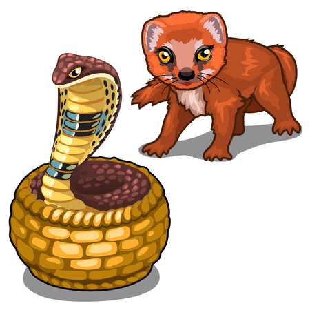 Mongoose and cobra. Vector animal isolated