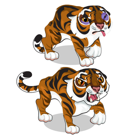 Aggressive tiger and tiger with a bruise. Vector animals on a white background. Illustration isolated