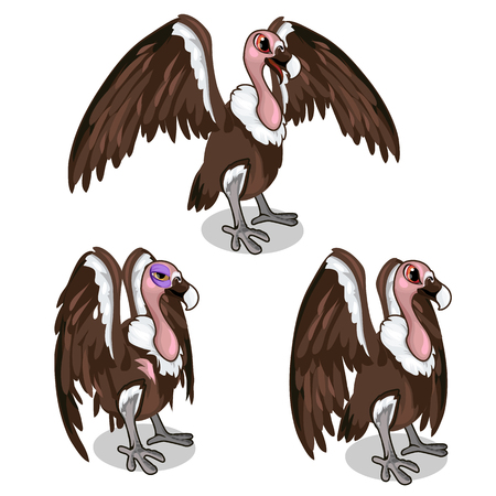 Set of three vultures, with spread wings, common and sick. Vector birds on a white background. Illustration isolated