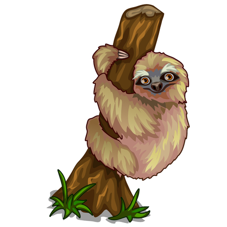 Cute sloth clinging to the trunk of tree. Vector Illustration