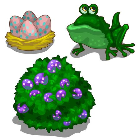 coldblooded: Set of toad, bush with berries and nest with eggs.