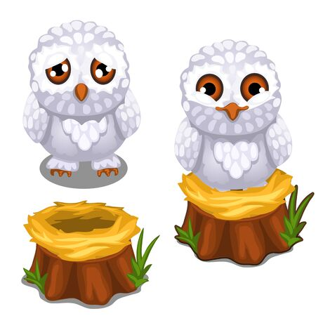 mournful: Sad and cheerful owlet on the nest on stump