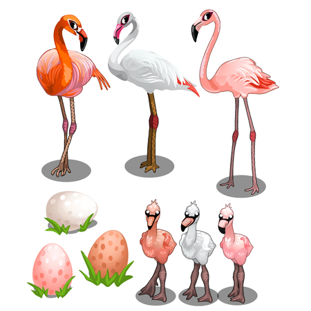 Group of large and small flamingos with eggs