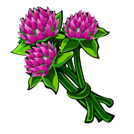 clovers: Bouquet of clover flowers isolated on a white background. Vector illustration in cartoon style
