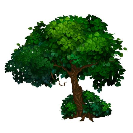 Old tree with twisted trunk and large green crown of leaves. Vector illustration isolated on a white background