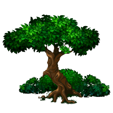 Old big oak tree with lush green foliage and bushes in the background Illustration