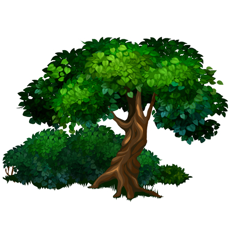 Large detailed tree oak. Nature, forest, ecology concept.
