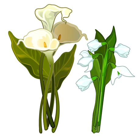 White Calla and snowdrops, bouquet of flowers Illustration