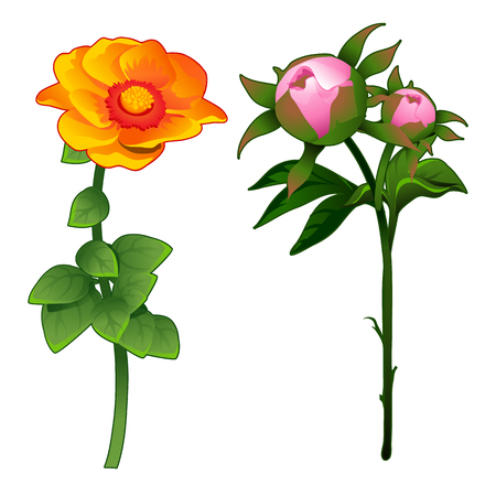 Blooming zinnia and non-blooming pink rose. Vector Illustration flower in cartoon style isolated on white background Stock Photo
