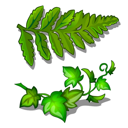Leaves of fern and vine plant isolated on white background. Vector plants in cartoon style