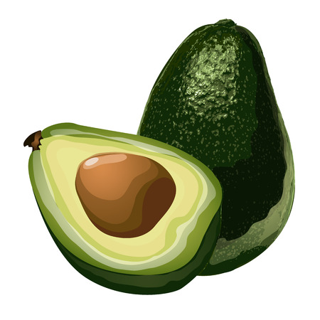 Green avocado, whole and slice with corn. Oily exotic fruit, vector food image in cartoon style. Illustration isolated on white background. Illustration