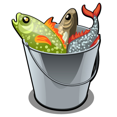 A stainless steel bucket filled with colorful fish isolated on white background. Vector illustration.