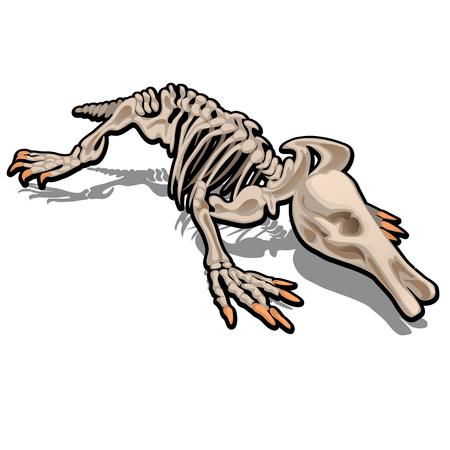 Squelette de fourmilier isolé sur fond blanc. Illustration vectorielle.
