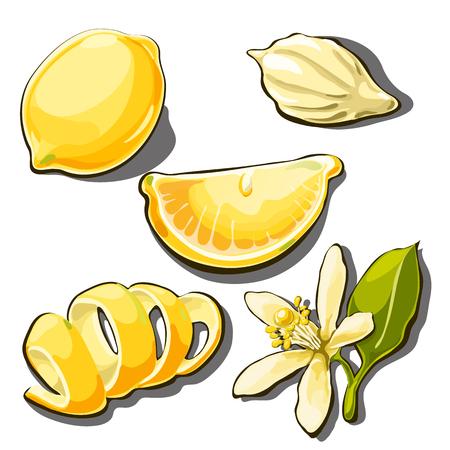 Whole ripe yellow lemon. Peel, slice, seed and flower of lemon isolated on a white background. Vector cartoon close-up illustration.