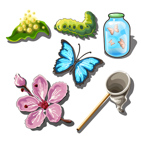 The set of objects on the subject of catching butterflies isolated on white background. Vector illustration.