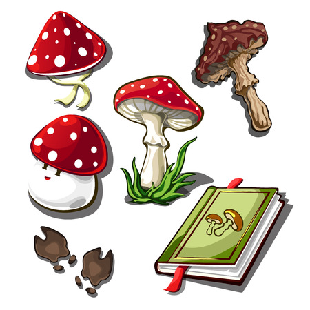 The set of objects on the subject of picking mushrooms isolated on a white background. Amanita poisonous mushroom. Vector illustration.