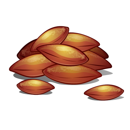 A heap of apricot pits isolated on white background. Vector cartoon close-up illustration. Illustration