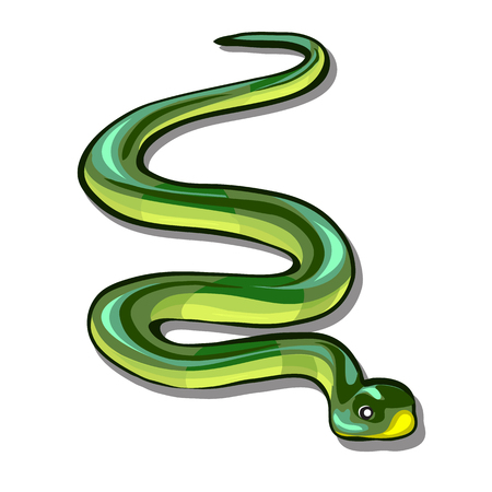 Green snake isolated on white background. Vector cartoon close-up illustration. Illustration