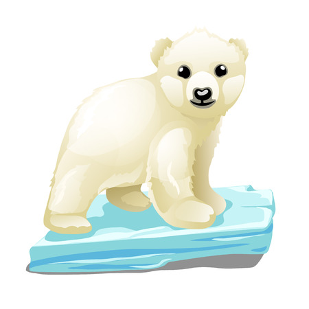 Cute polar bear floats on a drifting ice floe isolated on white background. Vector illustration.