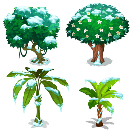 Tropical trees and plants frozen under the snow isolated on white background. Vector cartoon close-up illustration.