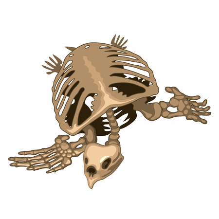 The skeleton of a prehistoric turtle isolated on white background. Vector illustration. Vector Illustration