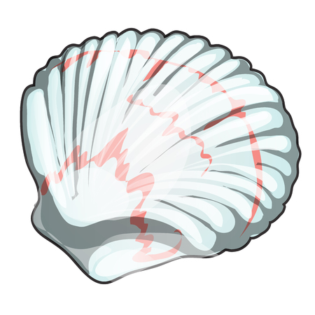 Scallop shell isolated on white background. Seafood and delicacies. Vector cartoon close-up illustration.