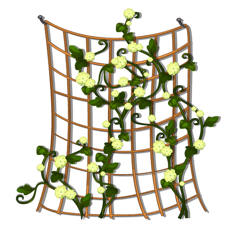Decorative hedge made of grid tied brown rope with climbing flowering plants isolated on white background. Vector cartoon close-up illustration. Illustration