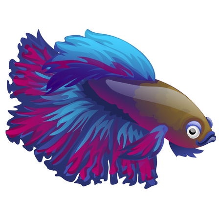 Cartoon blue betta fish, siamese fighting fish, betta splendens isolated on white background. Vector illustration.