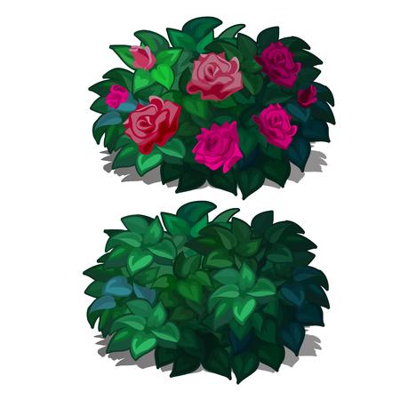 白い背景に孤立した花のバラとコンパクトな丸みを帯びた低木を設定します。景観デザインの家具のための開花植物。ベクターの図。