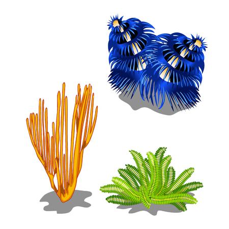 Set of colorful marine algae isolated on white background. Vector cartoon close-up illustration.