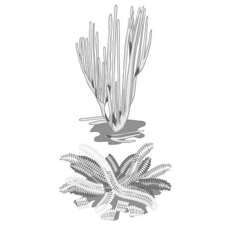 Set of extinct discolored algae isolated on white background. Vector cartoon close-up illustration. Illustration
