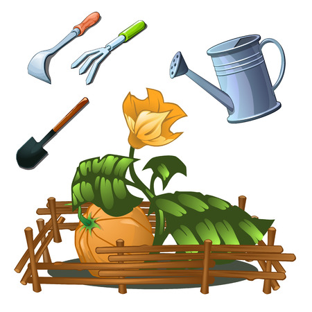 A set of garden tools to take care of a growing pumpkin isolated on white background. Vector cartoon close-up illustration.