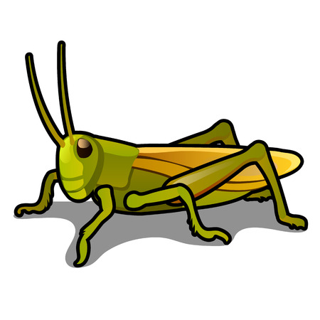 Green grasshopper isolated on a white background. Locusts. Pests of agriculture. Vector cartoon close-up illustration