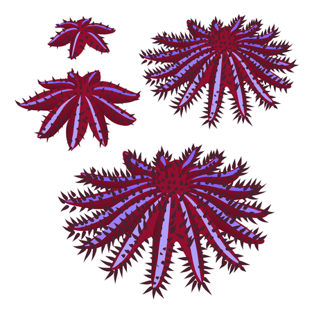 The growth stage of crown of thorns starfish or seastar or Acanthaster planci isolated on white background. Vector illustration Vektorové ilustrace