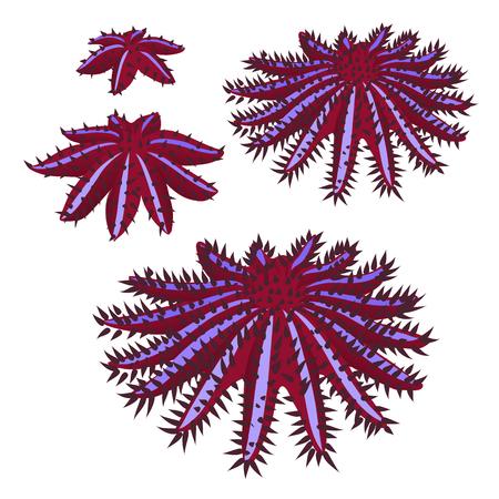 Etap wzrostu korony cierniowej rozgwiazdy lub seastar lub Acanthaster planci na białym tle. Ilustracja wektorowa