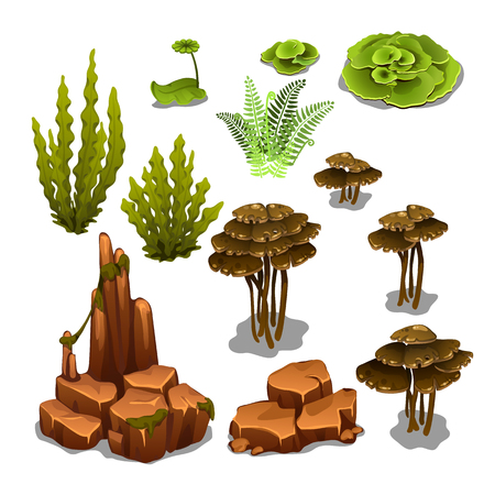 The set of algae and underwater rocks isolated on white background. Vector illustration Stock Illustratie