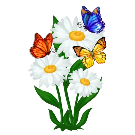 Poster sketch on a summer theme with chamomile flowers and colorful butterflies isolated on white background. Vector cartoon close-up illustration