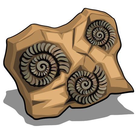 Set van versteende schelp van Ammoniet geïsoleerd op een witte achtergrond. Vector cartoon close-up illustratie.